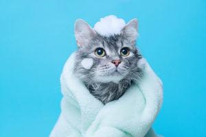 20代・30代向け転職エージェント「キャリサポ」猫